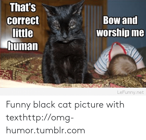 funny black: That's  Bow and  correct  worship me  little  human  LeFunny.net Funny black cat picture with texthttp://omg-humor.tumblr.com