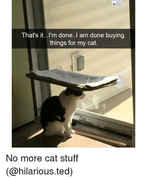 Cats, Funny, and Cat: That's it...I'm done. I am done buying  things for my cat. No more cat stuff (@hilarious.ted)