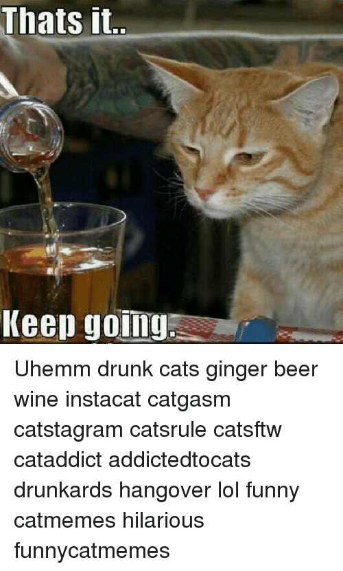 Cats And Wine Meme