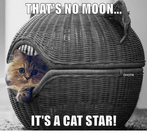 Thats No Moon: THATS NO MOON  CHOTK  IT'S A CAT STAR!