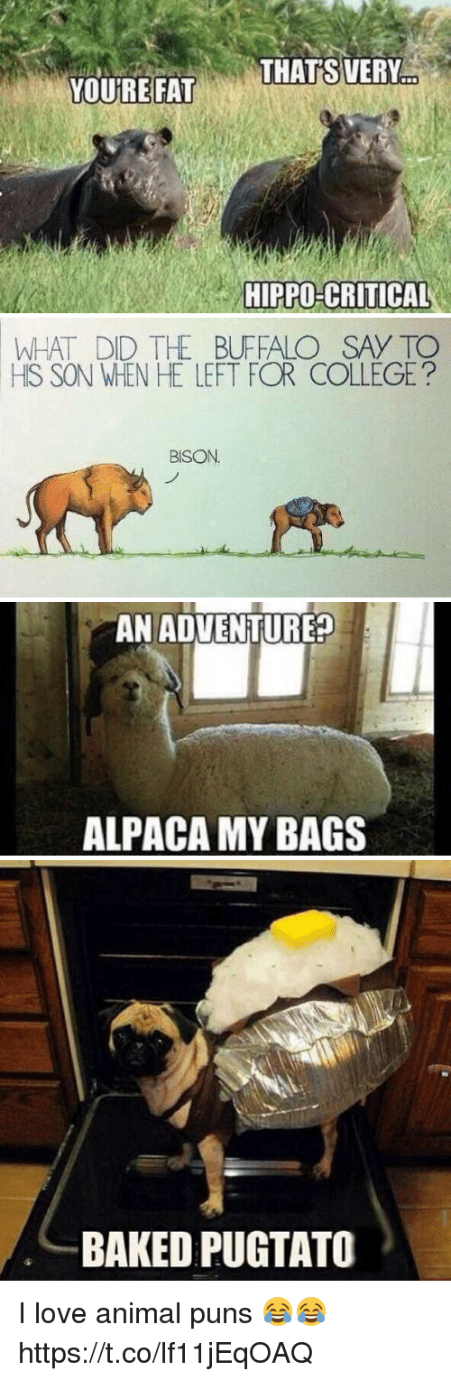 animal puns: THAT'S VERY  YOURE FAT  HIPPO-CRITICAL   WHAT DID THE BUFFALO SAY TO  HS SON WHEN HE LEFT FOR COLLEGE?  BISON   AN ADVENTURE?  ALPACA MY BAGS   BAKED PUGTATO I love animal puns 😂😂 https://t.co/lf11jEqOAQ