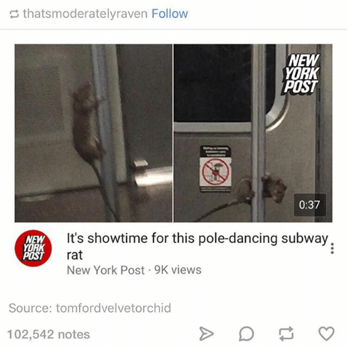 pole dancing: thatsmoderatelyraven Follow  NEW  YORK  POST  0:37  It's showtime for this pole-dancing subway.  NEW  YORK  rat  POST  New York Post 9K views  Source: tomfordvelvetorchid  102,542 notes
