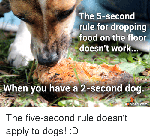 The 5 Second Rule For Dropping Food On The Floor Doesn T