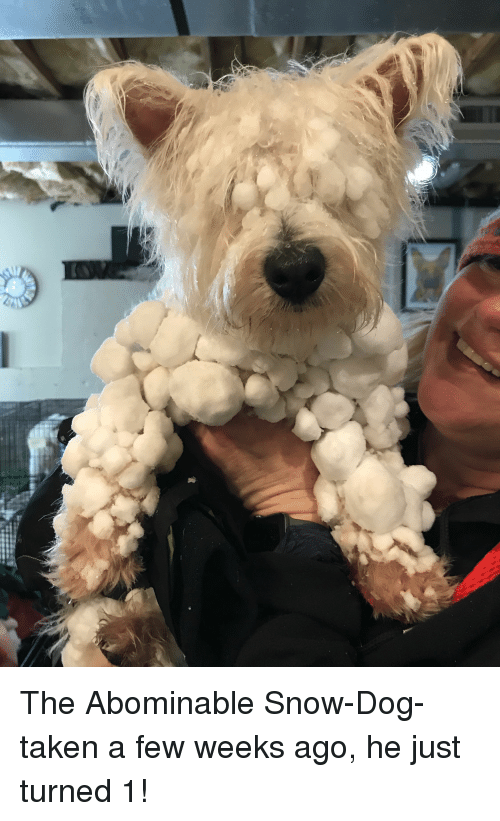 Taken, Snow, and Dog: The Abominable Snow-Dog- taken a few weeks ago, he just turned 1!