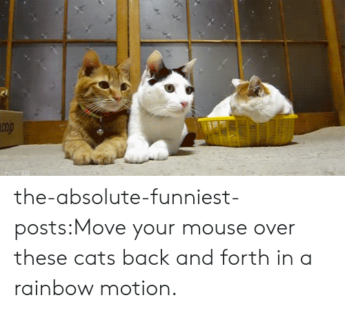 goo: the-absolute-funniest-posts:Move your mouse over these cats back and forth in a rainbow motion.