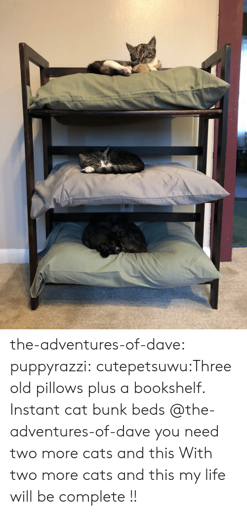 pillows: the-adventures-of-dave:  puppyrazzi:  cutepetsuwu:Three old pillows plus a bookshelf. Instant cat bunk beds  @the-adventures-of-dave you need two more cats and this  With two more cats and this my life will be complete !!