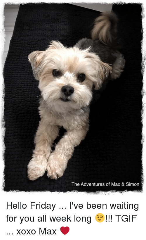 Hello Friday: The Adventures of Max & Simon Hello Friday ... I've been waiting for you all week long 😉!!!  TGIF ... xoxo Max ❤️