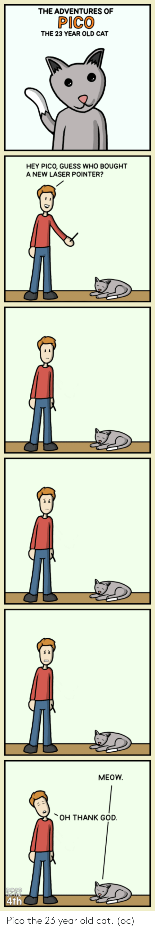 Oh Thank God: THE ADVENTURES OF  PICO  THE 23 YEAR OLD CAT  HEY PICO, GUESS WHO BOUGHT  A NEW LASER POINTER?  0  MEOW  OH THANK GOD Pico the 23 year old cat. (oc)