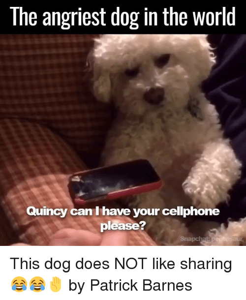 SIZZLE: The angriest dog in the world  Quincy can I have your cellphone  please This dog does NOT like sharing 😂😂✋  by Patrick Barnes