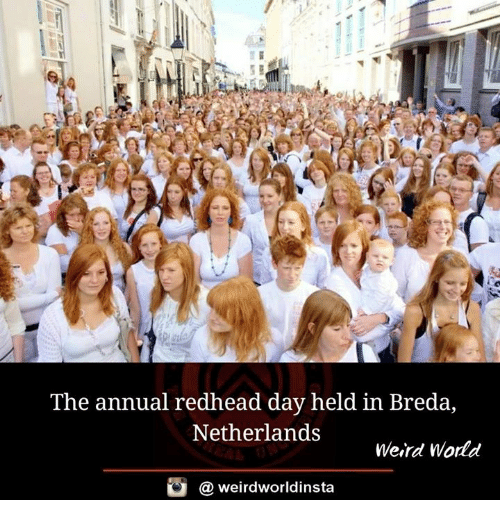 Memes, Weird, and Netherlands: The annual redhead day held in Breda,  Netherlands  Weird Wodd  @ weirdworldinsta