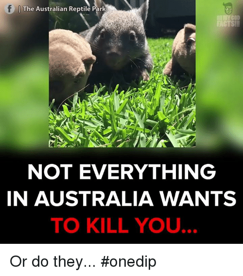 Memes, 🤖, and Gods: The Australian Reptile Park  OllMY GOD  FACTS!!!  NOT EVERYTHING  IN AUSTRALIA WANTS  TO KILL YOU. Or do they... #onedip