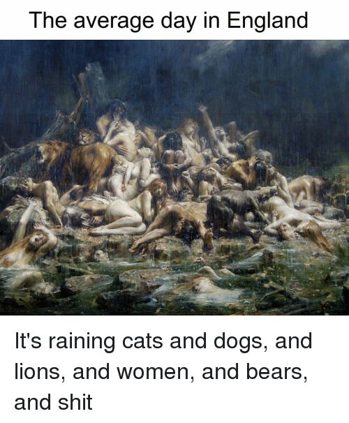 rain cat: The average day in England It's raining cats and dogs, and lions, and women, and bears, and shit