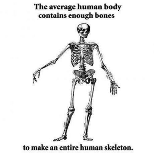 memes meme: the average human body contains enough bones to make, Skeleton