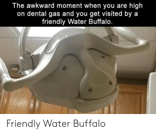 Awkward Moment: The awkward moment when you are high  on dental gas and you get visited by a  friendly Water Buffalo. Friendly Water Buffalo
