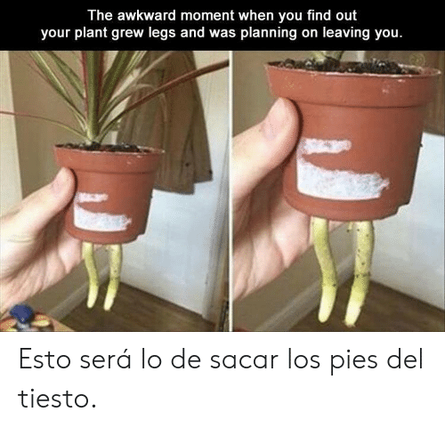 When You Find Out: The awkward moment when you find out  your plant grew legs and was planning on leaving you. Esto será lo de sacar los pies del tiesto.