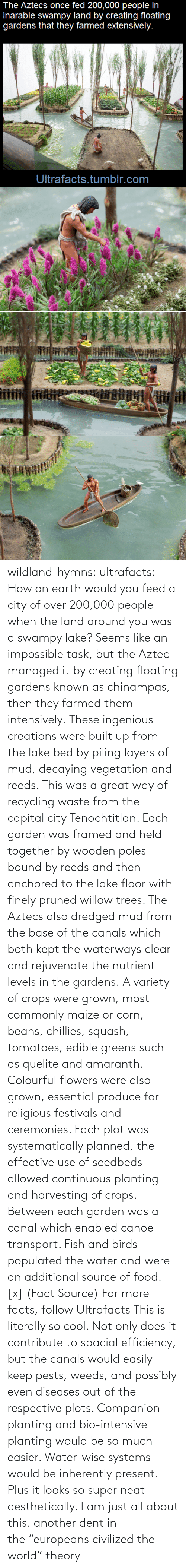 """Intensive: The Aztecs once fed 200,000 people in  inarable swampy land by creating floating  gardens that they farmed extensively.  Ultrafacts.tumblr.com wildland-hymns:  ultrafacts:  How on earth would you feed a city of over 200,000 people when the land around you was a swampy lake? Seems like an impossible task, but the Aztec managed it by creating floating gardens known as chinampas, then they farmed them intensively. These ingenious creations were built up from the lake bed by piling layers of mud, decaying vegetation and reeds. This was a great way of recycling waste from the capital city Tenochtitlan. Each garden was framed and held together by wooden poles bound by reeds and then anchored to the lake floor with finely pruned willow trees. The Aztecs also dredged mud from the base of the canals which both kept the waterways clear and rejuvenate the nutrient levels in the gardens. A variety of crops were grown, most commonly maize or corn, beans, chillies, squash, tomatoes, edible greens such as quelite and amaranth. Colourful flowers were also grown, essential produce for religious festivals and ceremonies. Each plot was systematically planned, the effective use of seedbeds allowed continuous planting and harvesting of crops. Between each garden was a canal which enabled canoe transport. Fish and birds populated the water and were an additional source of food. [x] (Fact Source) For more facts, follow Ultrafacts   This is literally so cool. Not only does it contribute to spacial efficiency, but the canals would easily keep pests, weeds, and possibly even diseases out of the respective plots. Companion planting and bio-intensive planting would be so much easier. Water-wise systems would be inherently present. Plus it looks so super neat aesthetically. I am just all about this.   another dent in the""""europeans civilized the world"""" theory"""