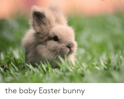 the baby: the baby Easter bunny
