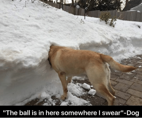 """🤖: """"The ball is in here somewhere l swear""""-Dog"""