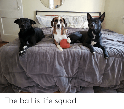 ball is life: The ball is life squad