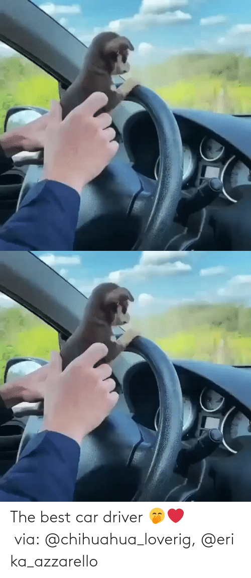 chihuahua: The best car driver 🤭❤️ via: @chihuahua_loverig, @erika_azzarello