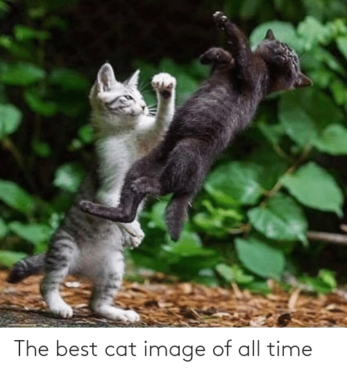 All Time: The best cat image of all time