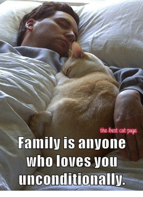 Best Cat: the best cat page  Family is anyone  Who lolles Vou  unconditionally