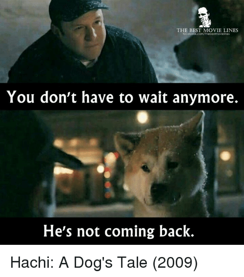 best movies: THE BEST MOVIE LINES  facebook.com/Thebestmovicino  You don't have to wait anymore.  He's not coming back. Hachi: A Dog's Tale (2009)