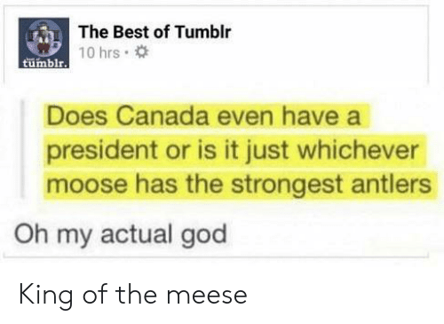 King Of: The Best of Tumblr  tumblrT0 hrs  Does Canada even have a  president or is it just whichever  moose has the strongest antlers  Oh my actual god King of the meese