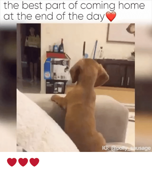Relatable, Sausage, and Day: the best part of coming home  at the end of the day  IG @polly sausage ❤❤❤
