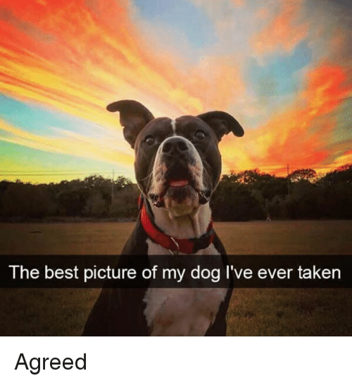 Memes, Taken, and Best: The best picture of my dog I've ever taken Agreed