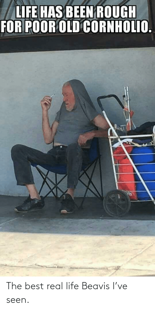 Life, Best, and Real: The best real life Beavis I've seen.