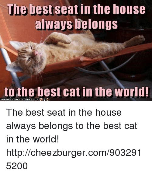 cheezburger: The best seat in the house  always elongs  to the best cat in the world The best seat in the house always belongs  to the best cat in the world! http://cheezburger.com/9032915200