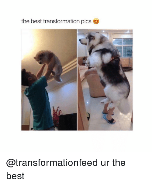 Memes, Transformers, and 🤖: the best transformation pics @transformationfeed ur the best