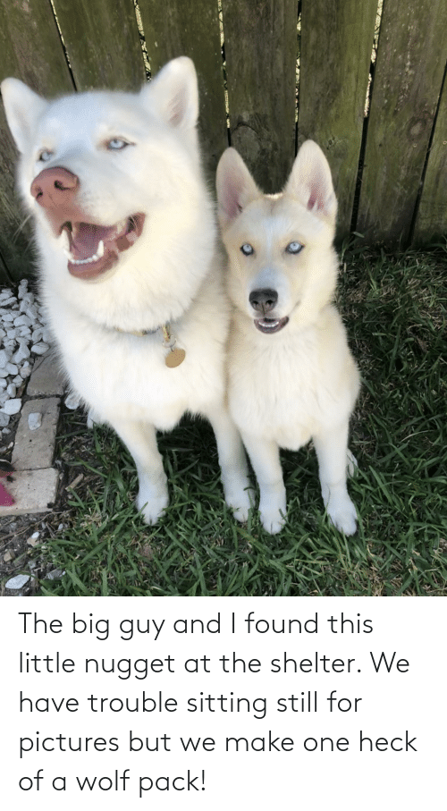 wolf pack: The big guy and I found this little nugget at the shelter. We have trouble sitting still for pictures but we make one heck of a wolf pack!