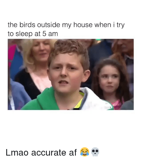5 Am, Af, and Funny: the birds outside my house when i try  to sleep at 5 am Lmao accurate af 😂💀