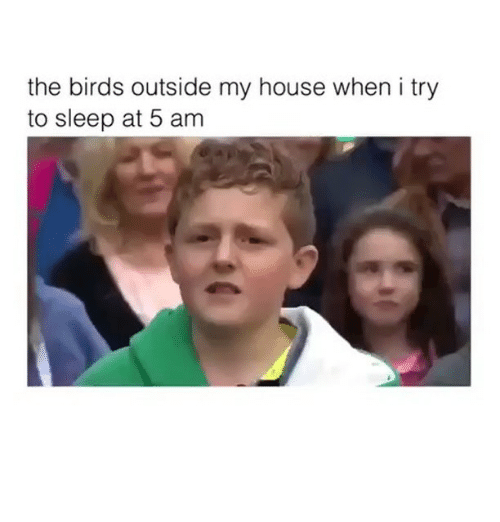 5 AM: the birds outside my house when i try  to sleep at 5 am
