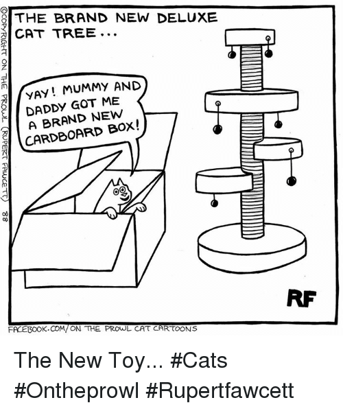 Cats, Facebook, and Memes: THE BRAND NEW DELUXE  CAT TREE  YAY MUMMY AND  DADDY GOT ME  NEW  CARDBOARD BOX!  OO  FACEBOOK.COM/ON THE PROWL CAT CARTOONS The New Toy... #Cats #Ontheprowl #Rupertfawcett