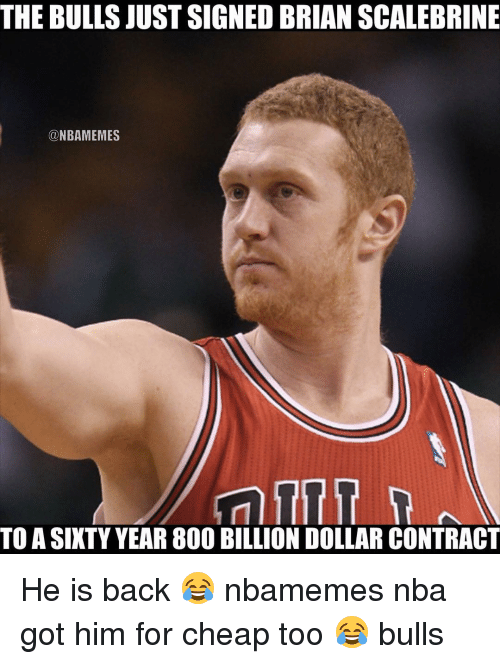 Basketball, Nba, and Sports: THE BULLS JUST SIGNED BRIAN SCALEBRINE  @NBAMEMES  TOASIXTY YEAR 800 BILLION DOLLAR CONTRACT He is back 😂 nbamemes nba got him for cheap too 😂 bulls