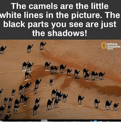 Memes, Black, and National Geographic: The camels are the little  white lines in the picture. The  black parts you see are Just  the shadows!  NATIONAL  GEOGRAPHIC  TURKIYE