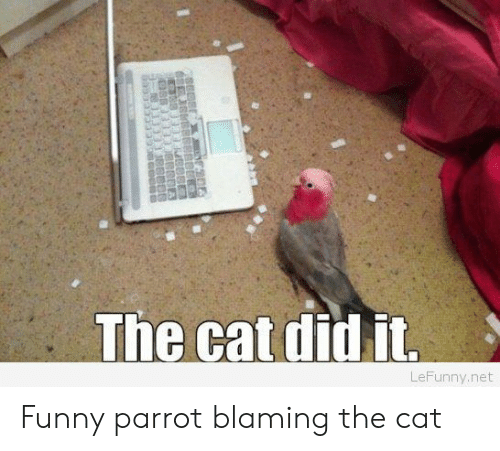 Funny Parrot: The cat did it  LeFunny.net Funny parrot blaming the cat