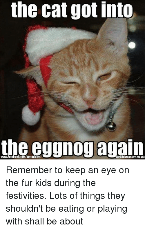 Cats, Memes, and Addicted: the cat got into  the·eggnog again  www·facebook.com/cat.addicts  cataddictsanony-mouse Remember to keep an eye on the fur kids during the festivities. Lots of things they shouldn't be eating or playing with shall be about