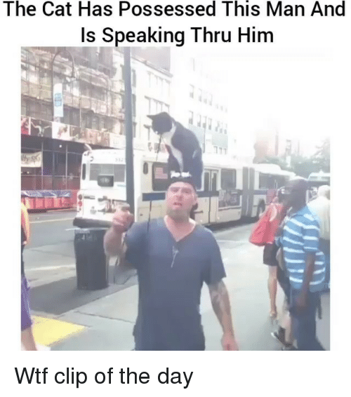Funny, Wtf, and Cat: The Cat Has Possessed This Man And  Is Speaking Thru Him Wtf clip of the day