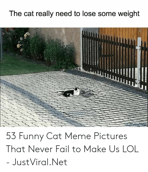 funny cat: The cat really need to lose some weight  JusViralNet 53 Funny Cat Meme Pictures That Never Fail to Make Us LOL - JustViral.Net