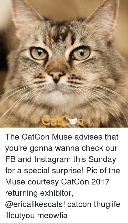 the muses: The CatCon Muse advises that you're gonna wanna check our FB and Instagram this Sunday for a special surprise! Pic of the Muse courtesy CatCon 2017 returning exhibitor, @ericalikescats! catcon thuglife illcutyou meowfia