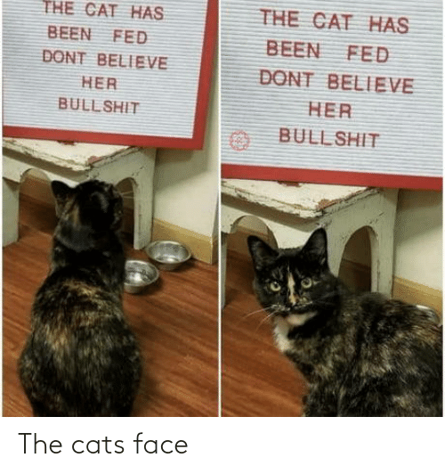 Cats: The cats face