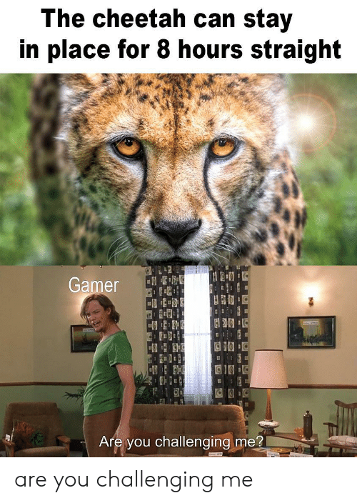 Cheetah: The cheetah can stay  in place for 8 hours straight  L42  Gamer  Are you challenging me? are you challenging me
