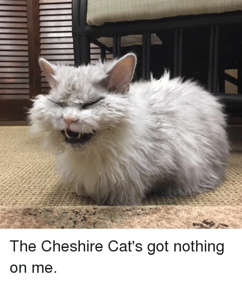 Cats, Memes, and 🤖: The Cheshire Cat's got nothing on me.