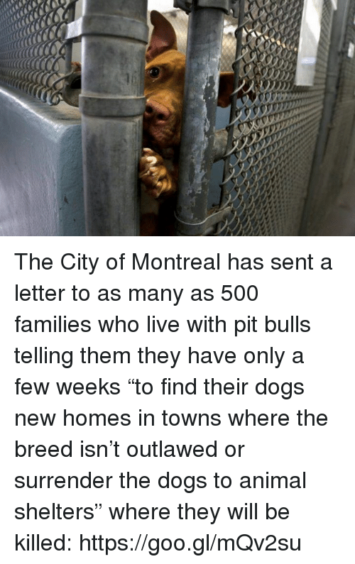 """Senting: The City of Montreal has sent a letter to as many as 500 families who live with pit bulls telling them they have only a few weeks """"to find their dogs new homes in towns where the breed isn't outlawed or surrender the dogs to animal shelters"""" where they will be killed: https://goo.gl/mQv2su"""