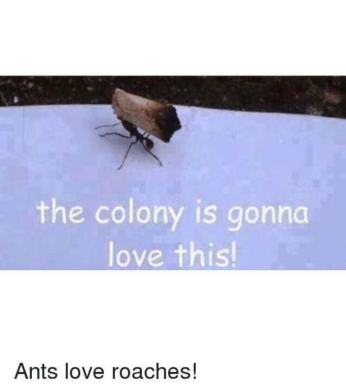 the colony: the colony is gonna  love thisl Ants love roaches!