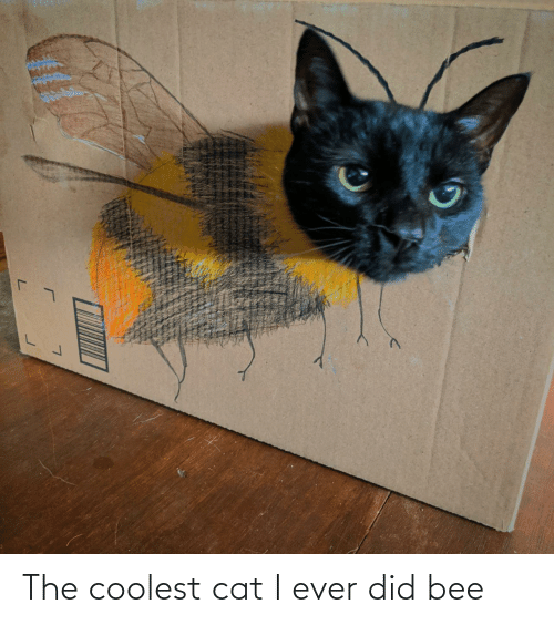 Coolest: The coolest cat I ever did bee